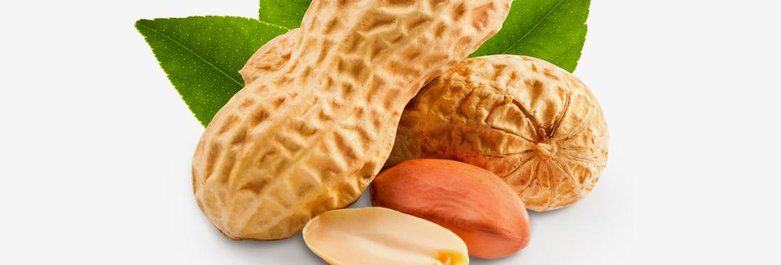 Erdnüsse geröstet & gesalzen